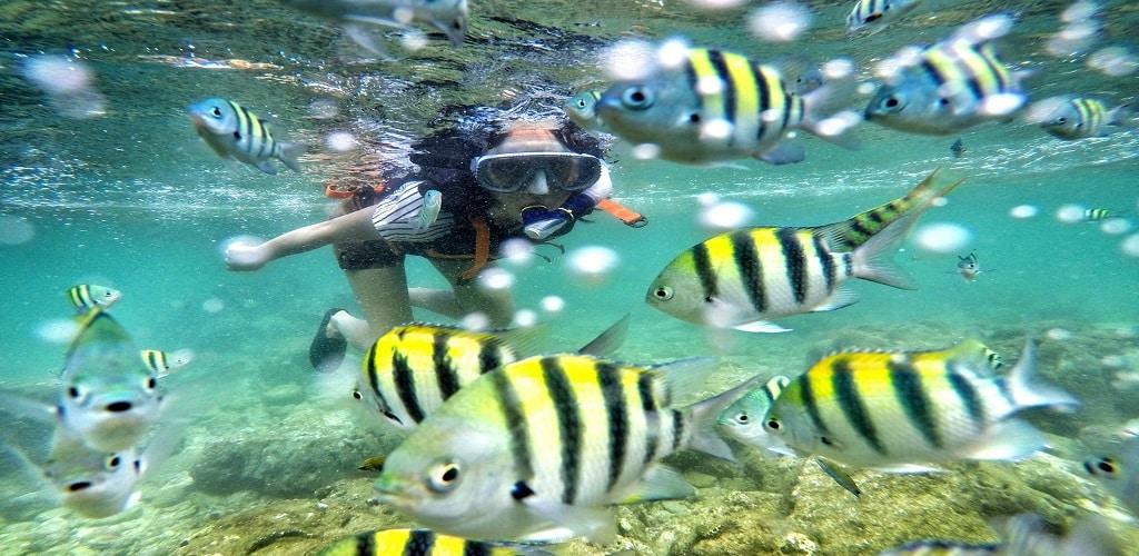 Snorkeling di jogja