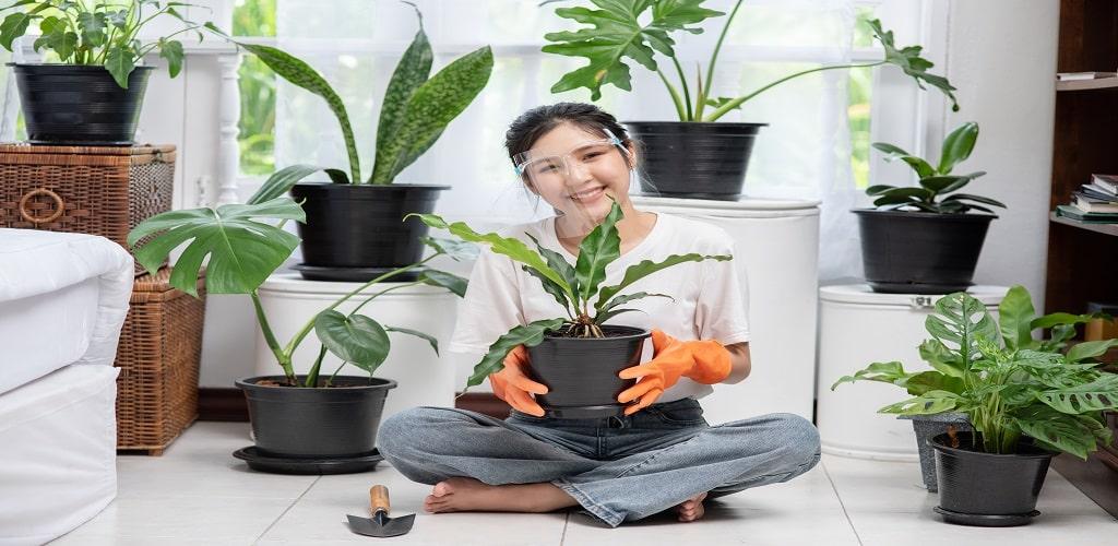 cara merawat tanaman hias