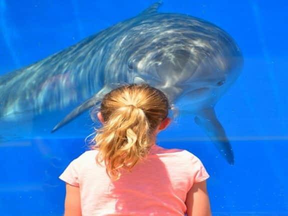 Wisata Jakarta Aquarium